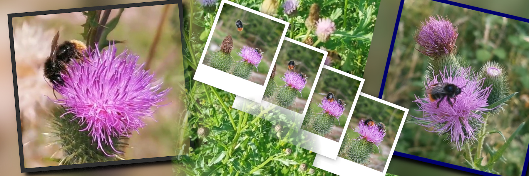bees_2021_1800x600